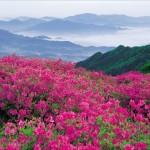 rozova dolina rent a car burgas